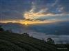 1050731-劉豪老師在龍銀山花園後方茶園拍攝