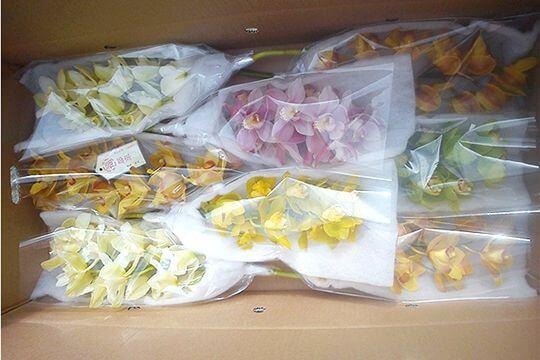 花卉禮盒裝 相片來源:阿里山花舞山嵐農莊