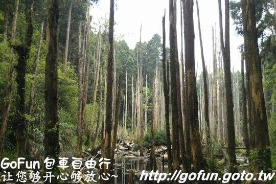 忘憂森林  GoFun景點實拍