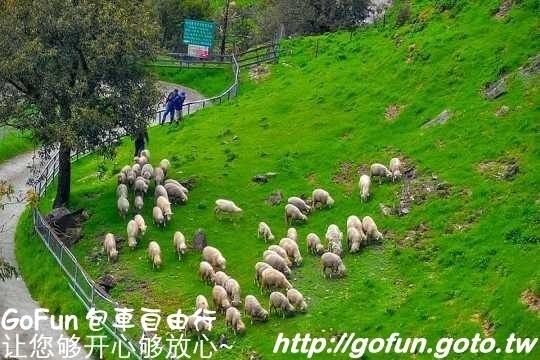 清境農場  GoFun景點實拍