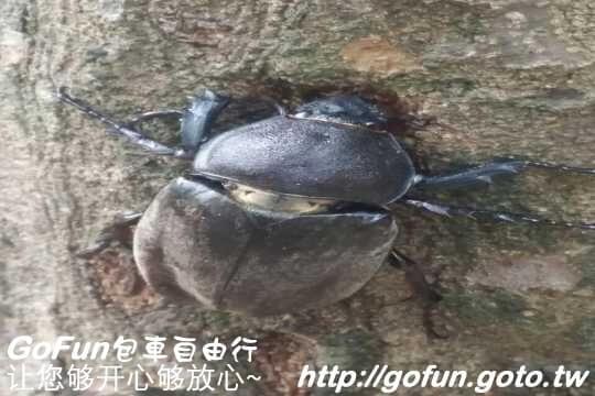 沐心泉  GoFun景點實拍