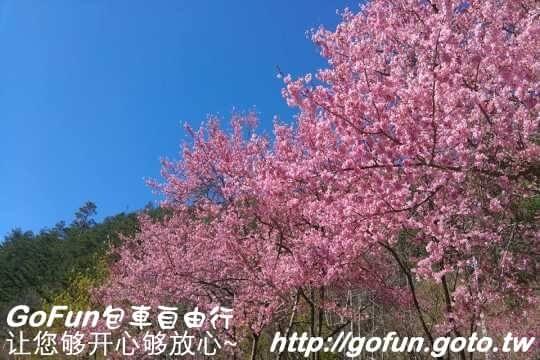 武陵農埸  GoFun景點實拍