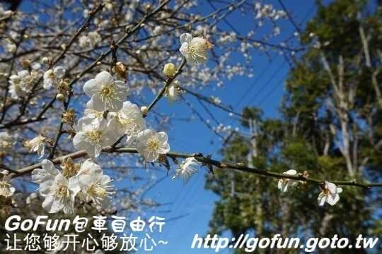 梅花森林  GoFun景點實拍