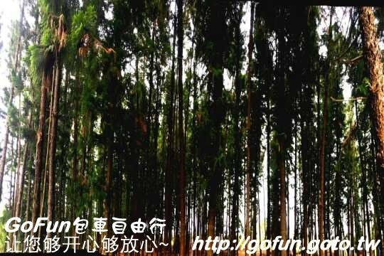 九天黑森林  GoFun景點實拍