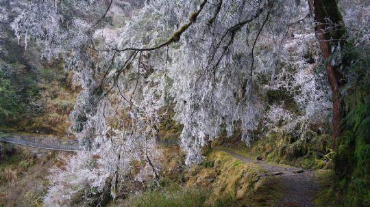太平山雪景