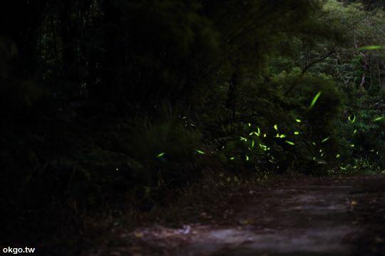 螢火蟲 相片來源:新竹民宿‧南園落水宿泊