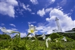 綠島風景大師級的作品