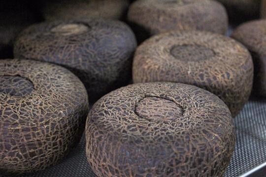 尋覓烏龍製作過程 相片來源:草前茶業文化