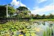 民宿的池塘