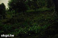 東勢民宿~168活水源