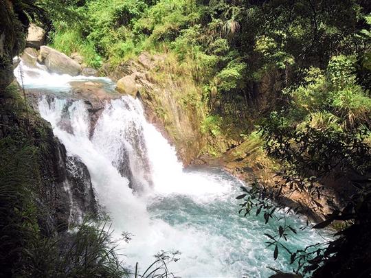 拉拉山-山蘇的故鄉森林溪秘境