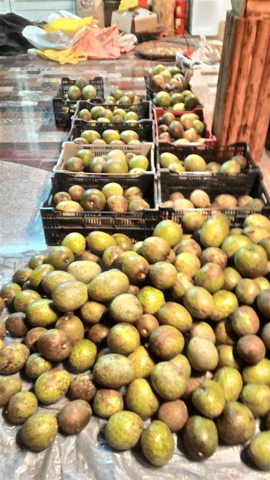 刺果番荔枝(阿娜娜、阿那那、紅毛榴槤)