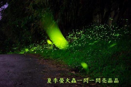 苗栗大湖民宿‧日光森林