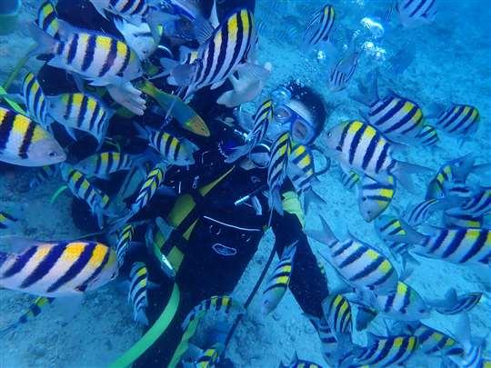 與熱帶魚共舞