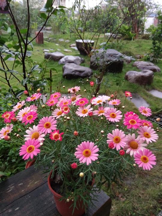 宜蘭蜻蜓雅茿庭園民宿