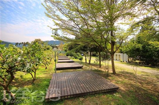 1.木棧板區
