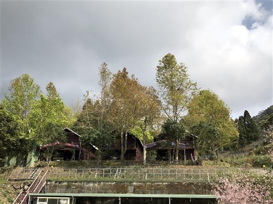 拉拉山紫薇仙境