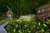 桃園大溪慈湖民宿~百吉星墅:桃園後慈湖包棟民宿、景觀餐廳、露營住宿、咖啡、果園