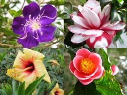 日月潭‧Bliss幸福天使花園