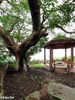 景好園‧千年神木