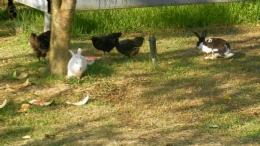 園區內跑跳碰的動物