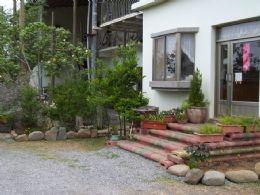 民宿前門角落植物聚落