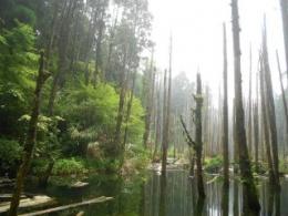 週邊景點~忘憂森林