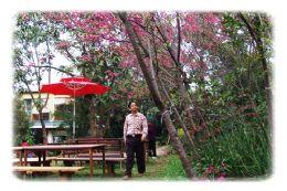樹之王花園餐廳浪漫雅座