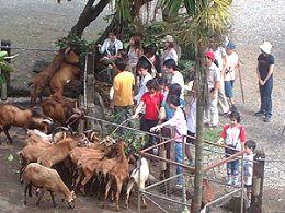 知性之旅∼餵羊