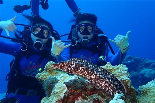 綠島‧好朋友潛水中心