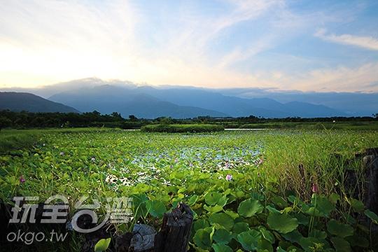 鹿野新良濕地