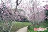 新社櫻花鳥森林休閒餐廳