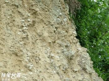 過港貝化石層