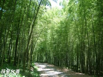 孟宗竹蔭林道、莊仙公(大鞍竹海風景區)