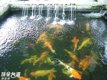 欣昌金錦鯉魚園