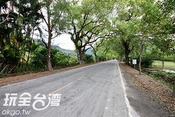 武陵綠色隧道(瑞豐樟樹綠色隧道)