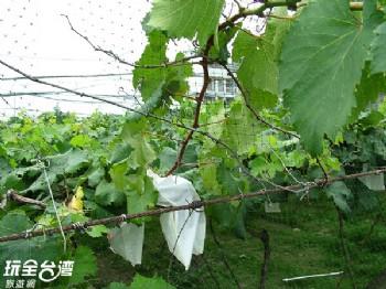 鐮村葡萄觀光果園