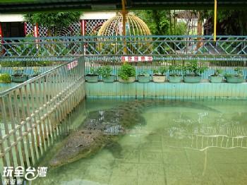 鱷魚王(已歇業)