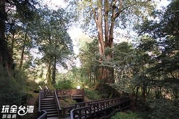 阿里山巨木群棧道