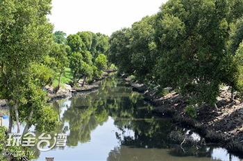紅樹林茄苳溪保護區