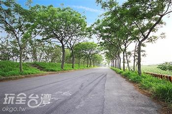 苦楝綠色隧道(苦揀花道)