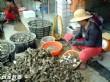 布袋漁港觀光漁市