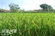 山水稻米文化館