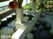 愛蘭里紹興泉