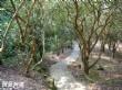 草嶺水濂洞步道
