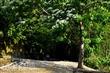 大窩生態園區