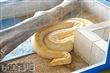 世界蛇王教育農場