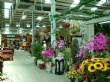 大雅國際花市