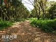 建功森林親水公園