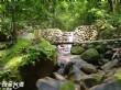 雙溪樹木園(雙溪母樹林)